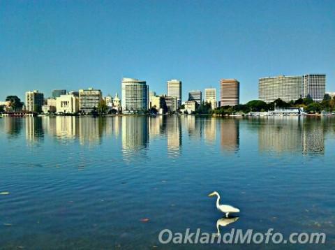 lake merritt birds
